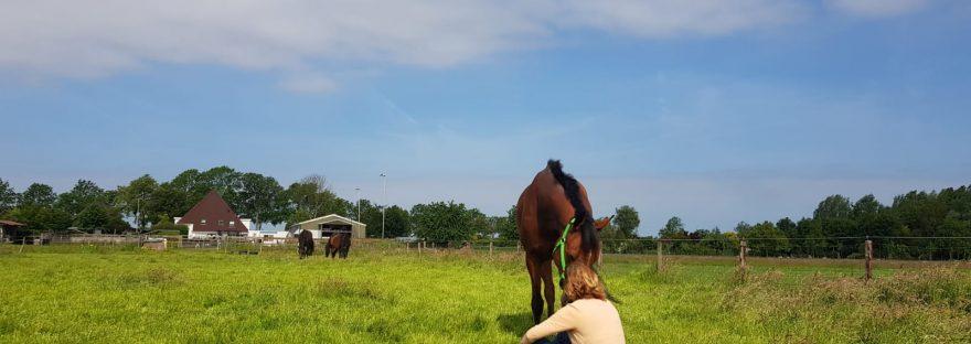 Coaching met paarden Hoorn